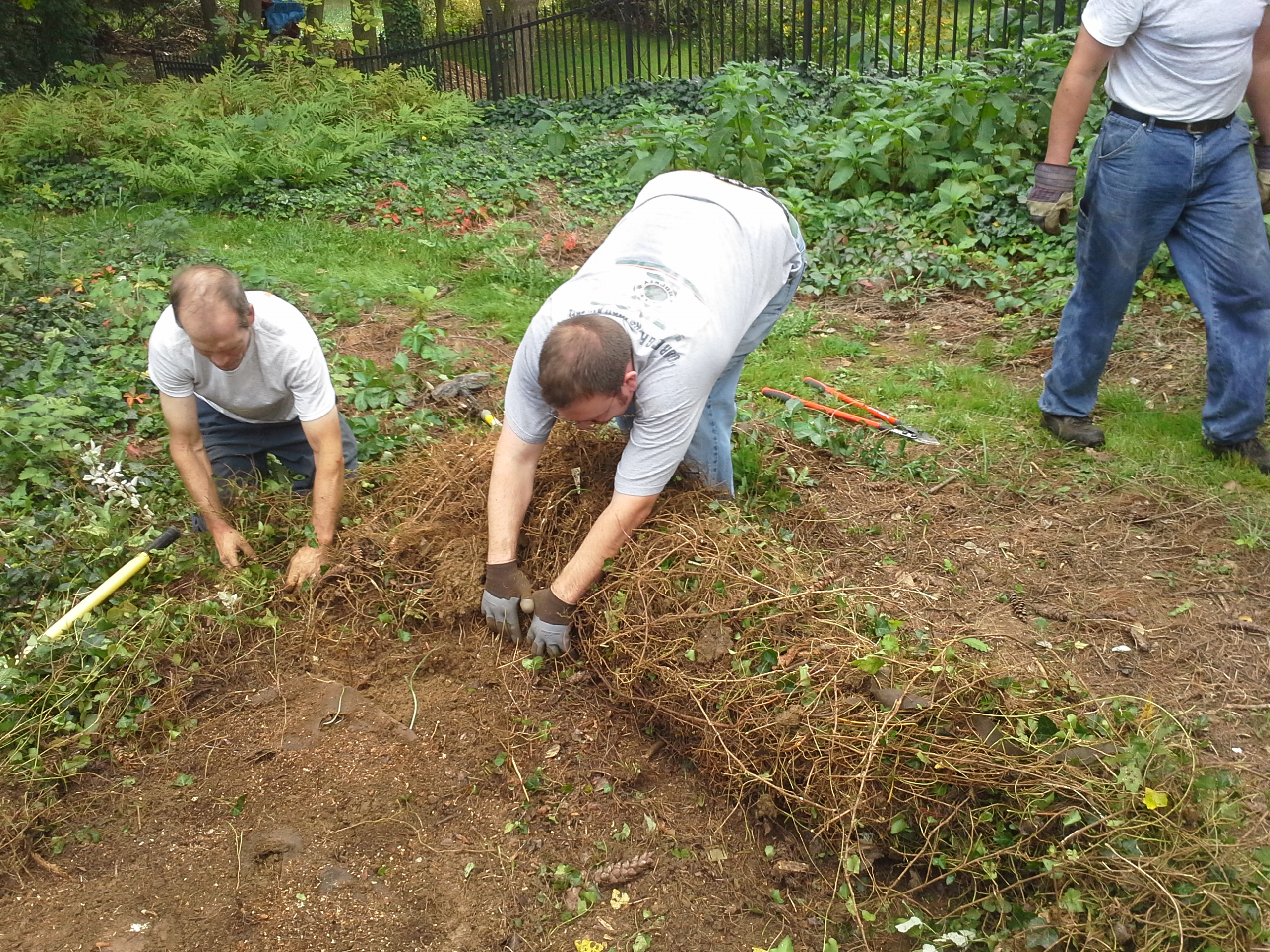 """Steve and Phil roll a """"carpet"""" weeds off of a garden."""