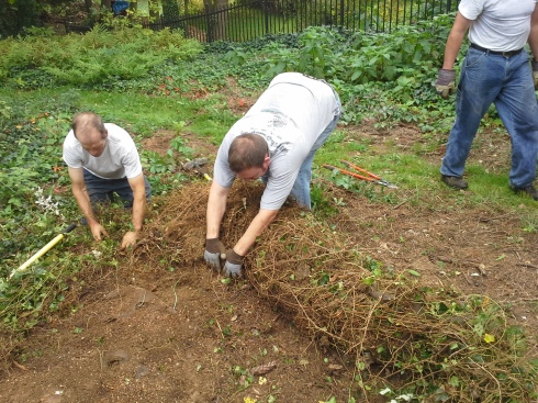 "Steve and Phil roll a ""carpet"" weeds off of a garden."